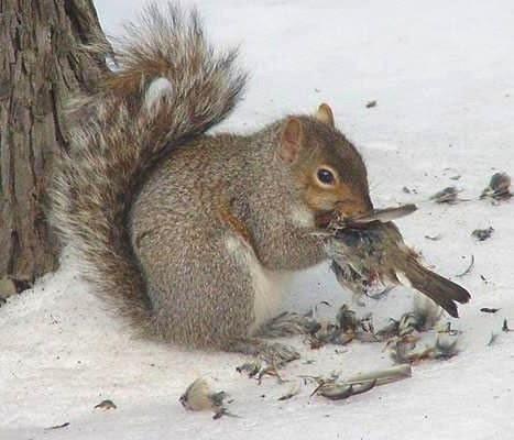 squirrel+eating+bird.jpg