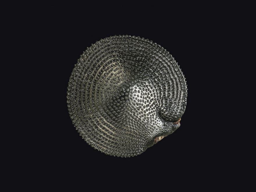 2016 Nikon Macro Photo Contest Winners Show The World Like You've Never Seen Before - Curvepod Fumewort (Corydalis Curvisiliqua) Seed