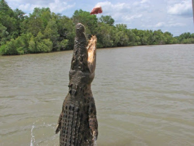 http://2.bp.blogspot.com/-4xkmGuJtQO0/UPORj7y_obI/AAAAAAAACaM/9u3gxz1nn_I/s400/Salt+Water+Crocodile+3.jpg