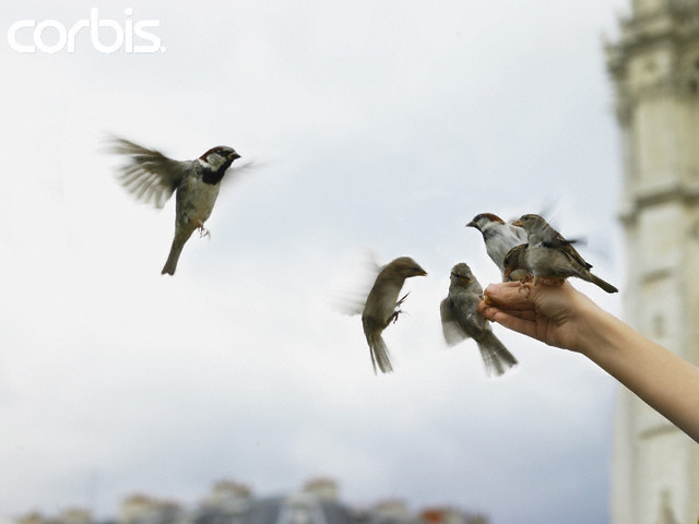Kisah seekor burung pipit di zaman Nabi Ibrahim AS
