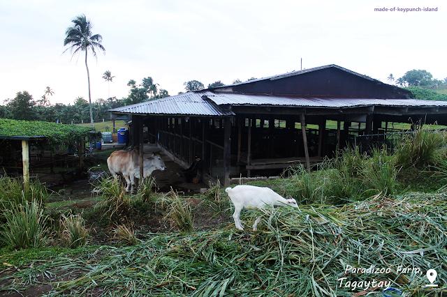 Animals from Paradizoo Farm