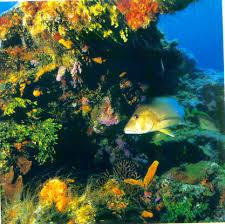 pelestarian terumbu karang untuk lingkungan sosial dan hayati
