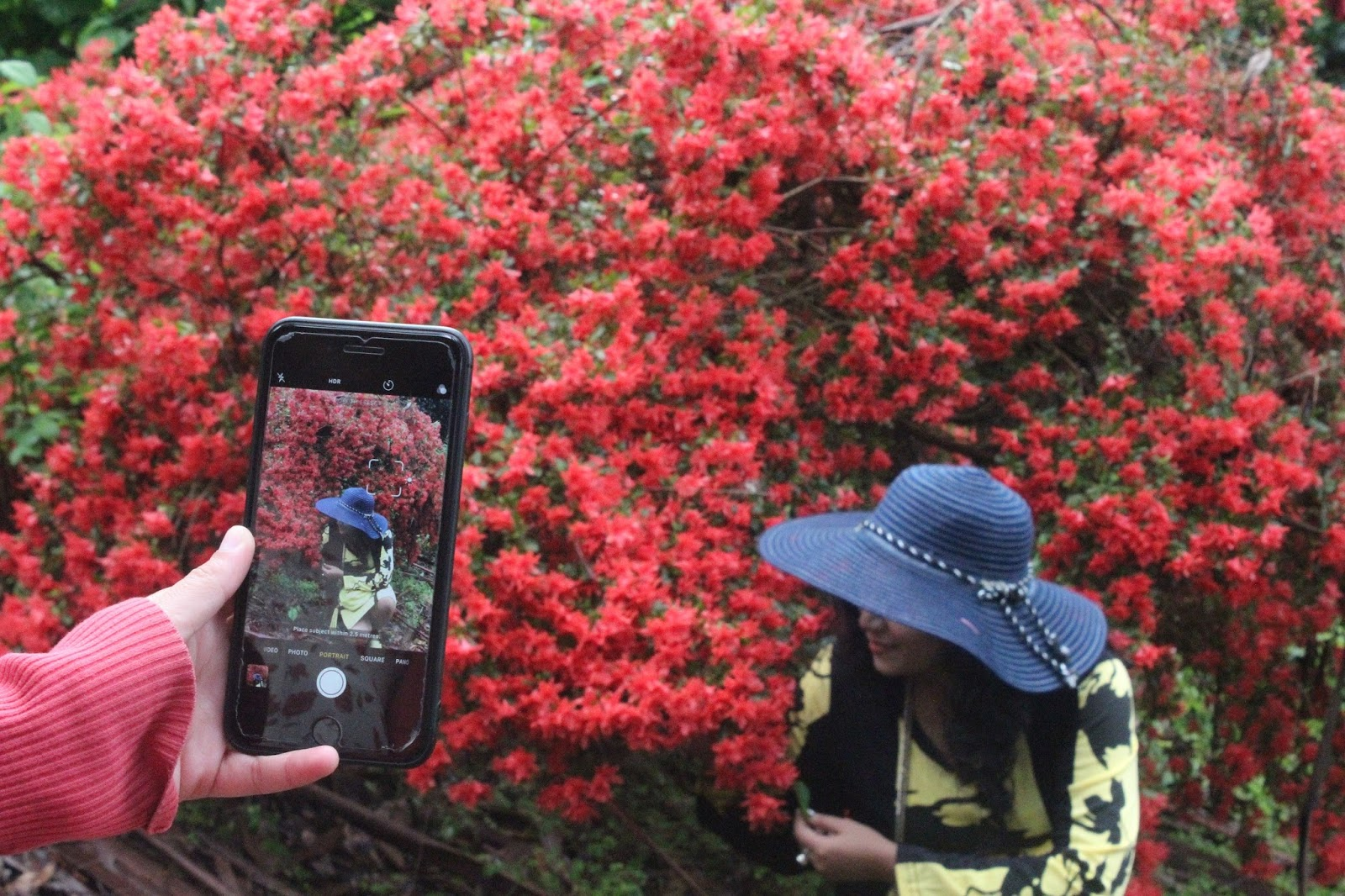 The Must Visit Place In Dandenong Ranges Victoria Australia