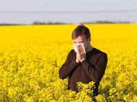 Pencegahan dan pengobatan Alergi serbuk bunga