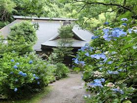 箱根のあじさい寺
