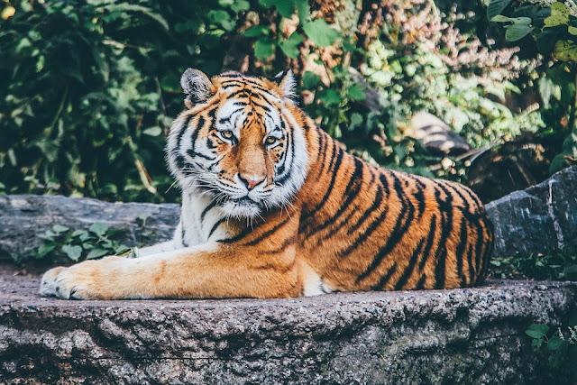 Wörterliste Tiger, Wort mit Tiger, Wörter die Tiger beinhalten
