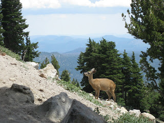 Deer crossing the Lassen Peak Trail, Lassen Volcanic National Park, California