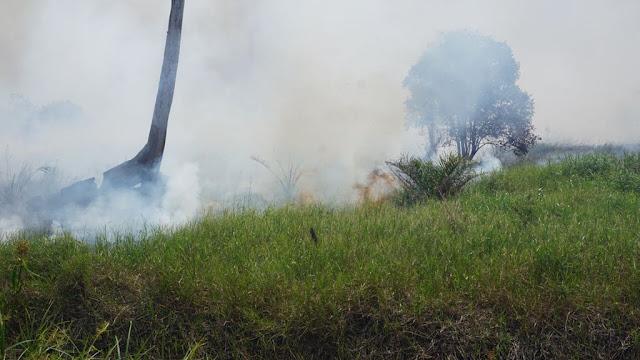 Perkumpulan Hijau Temukan Kebakaran di Areal Moratorium Gambut
