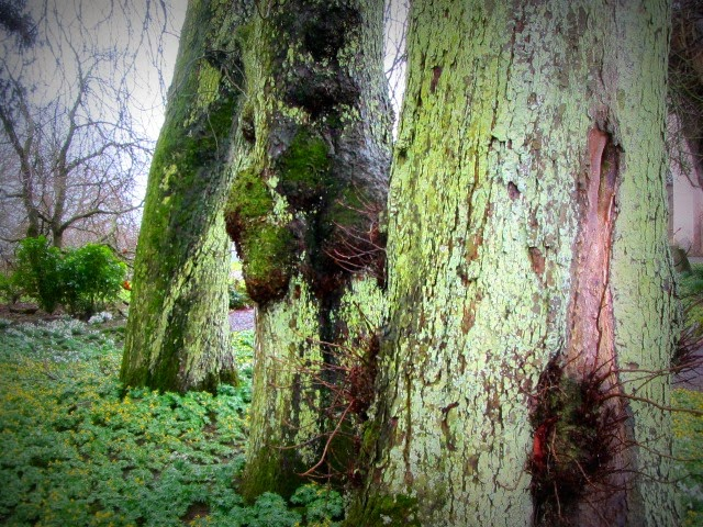Trees Lichen