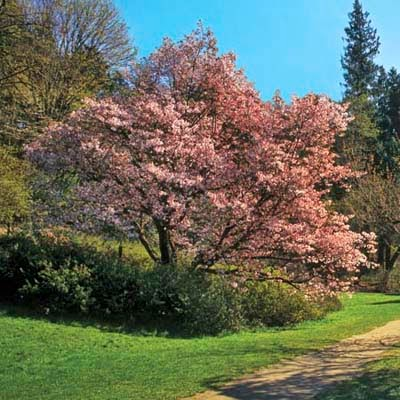 8 Fastest Growing Shade Trees