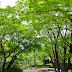 1843/1000 池田山公園(東京都品川区)