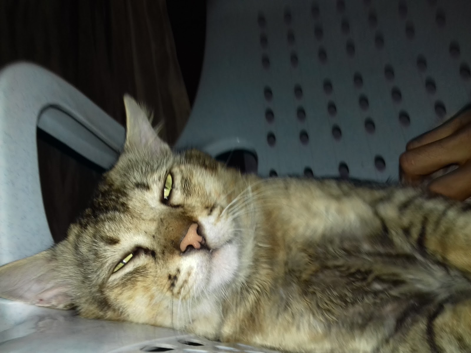Hayat Seekor Kucing Hayat Seekor Kucing