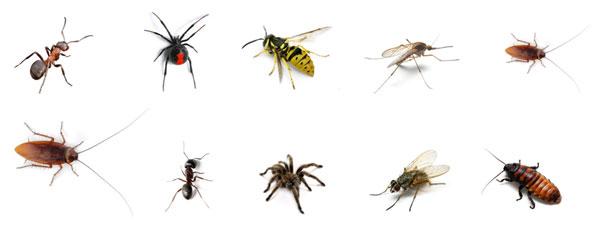 انواع الحشرات التي تكافحها شركة مكافحة حشرات بالخرج