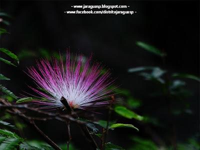 Flor de beleza singular fotografada no PEJ