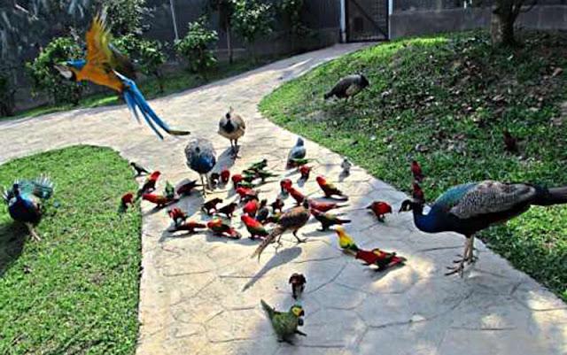Bird PARK,kUALA lUMPUR,cuti sekolah bermula