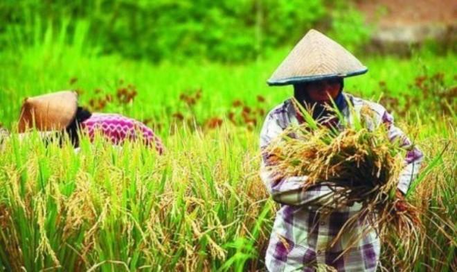 Malaysia Apresiasi Kemajuan Pertanian Indonesia Makmur Gazali