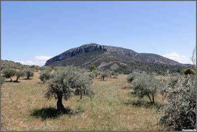 Campiña pricense con el Cerro De La Degollá al fondo