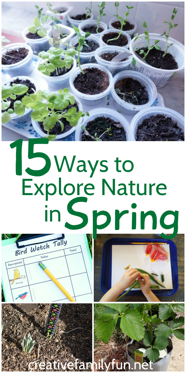 Spring is a great time to explore nature with y our kids. Here are 15 activities to help you examine plants, get in the garden, and watch for birds and other wildlife.