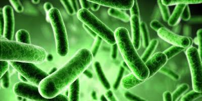 cara melawan virus dalam tubuh