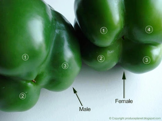 Peppers the Easy Way!