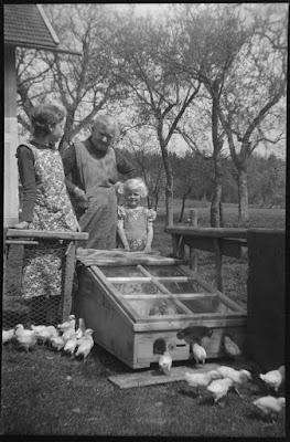 Hühner auf dem Bauernhof - Gars am Inn - 1930-1950