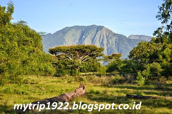 Wisata Taman Nasional Baluran