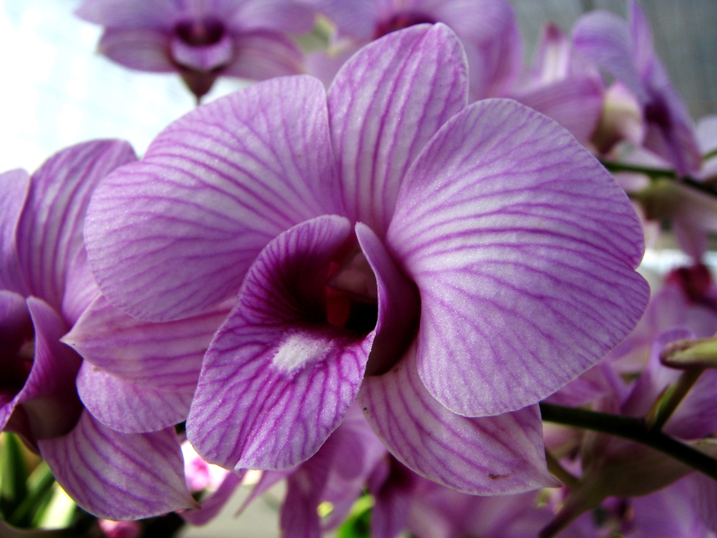 10 Gambar Bunga Anggrek Ungu Gambar Top 10