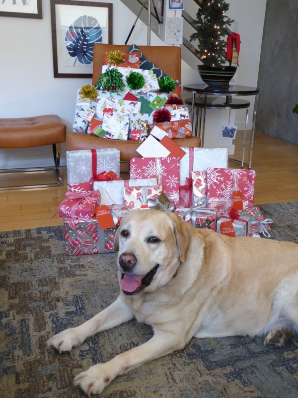 Christmas Labrador presents