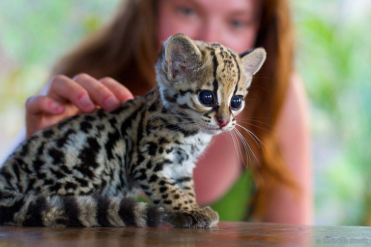 31 Heart-Melting Pictures Of Cute Baby Animals
