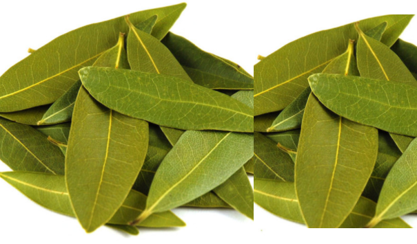 Bay leaf meaning in hindi, Spanish, Malyalam, tamil, telugu, urdu, kannada name, gujarati, in marathi, indian name, marathi, tamil, english, other names called as, translation