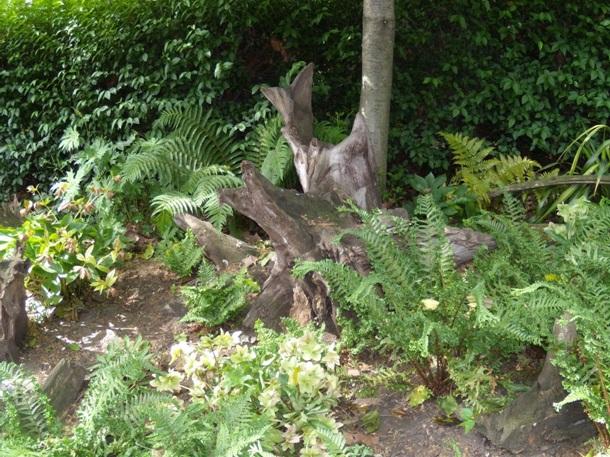 Коряги в саду