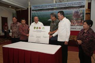 Muba Replanting 56.000 Hektar Lahan Sawit