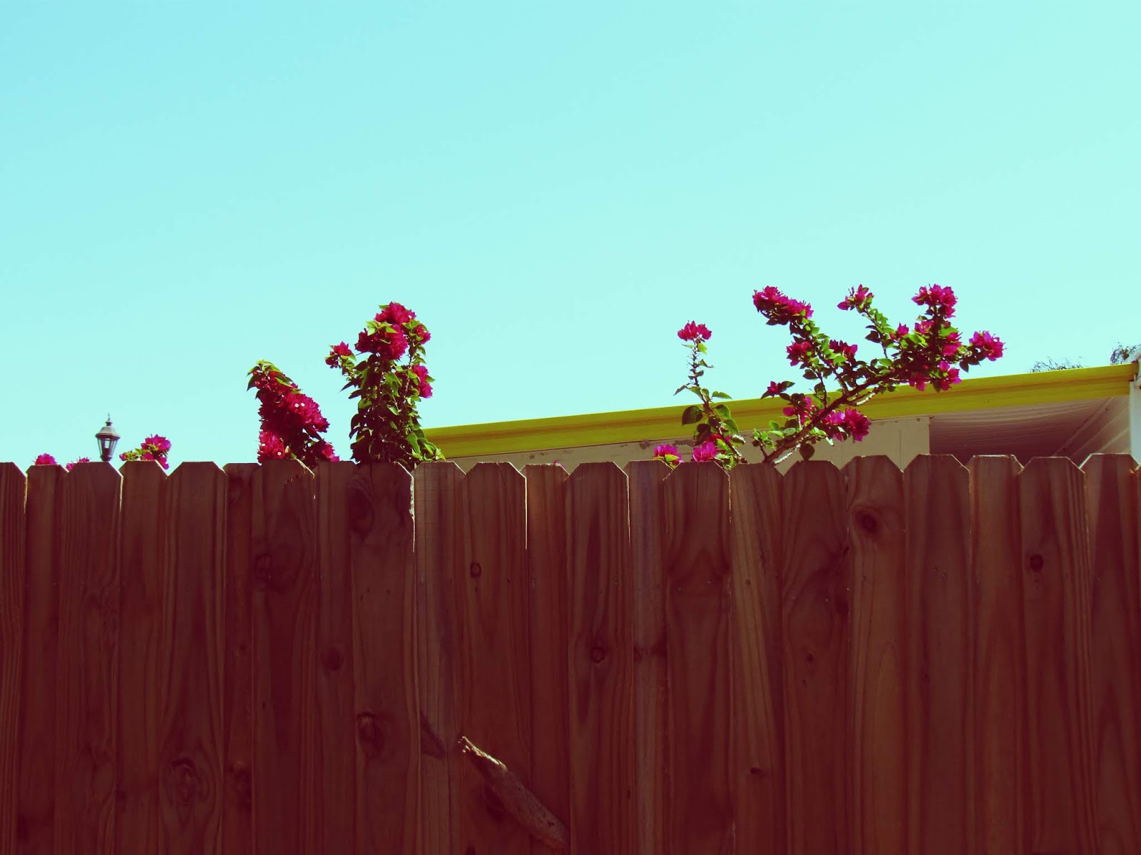 Wooden Fence in Residential Neighborhood of Florida With Pink Flowers and a Hot Tin Roof With Sunshine Yellow Paint