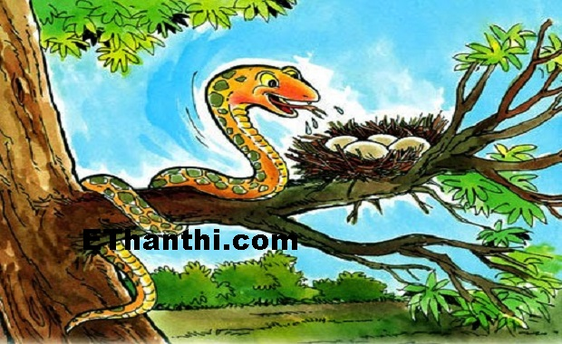 பாம்பை கொத்த விட்டு கைதி டார்ச்சர்