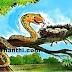 இந்தோனேசியாவில் பாம்பை கொத்த விட்டு கைதி டார்ச்சர் - கொடூரம் !
