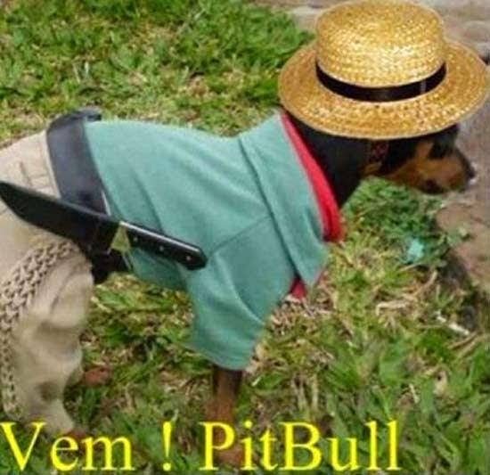 Muitas vezes 20 imagens de animais com frases engraçadas - Humorada Mente - Sem  PD92