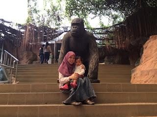 Ragunan gorilla schmutzer