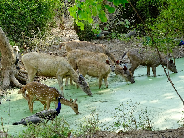 Watering hole in summer