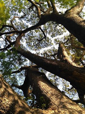 Hutan Kota Malabar (2)
