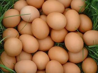 bisnis-ukm-pengolahan-telur-unggas