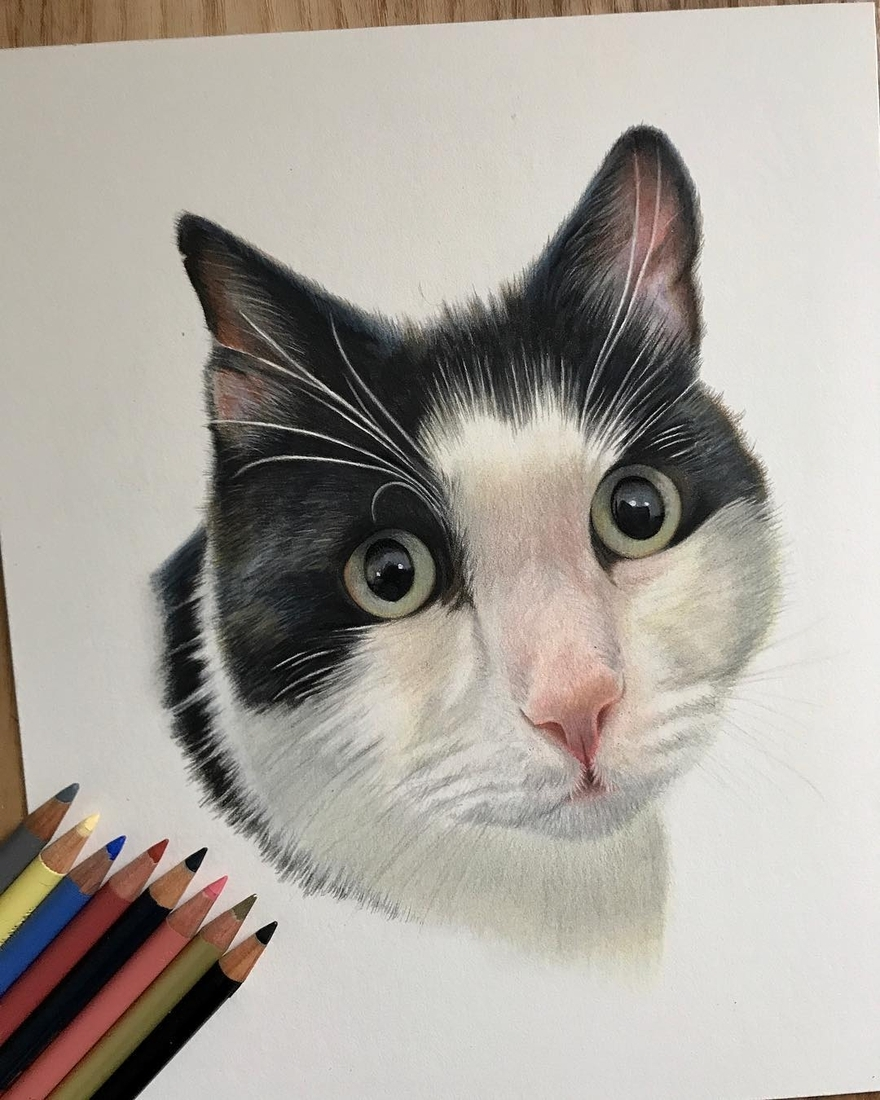 12-Cat-Paul-Miller-Wildlife-and-Domestic-Animal-Drawings-www-designstack-co