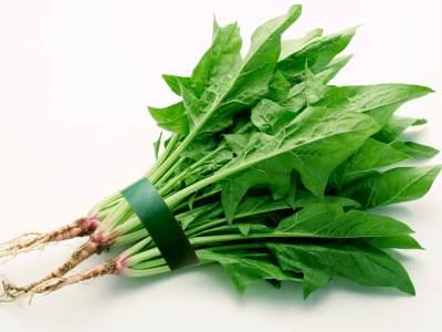 四季健康生活站: 如何挑選菠菜?
