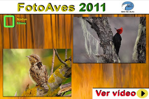 Fotoaves 2011