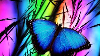 mariposa-sobre-el-arco-iris