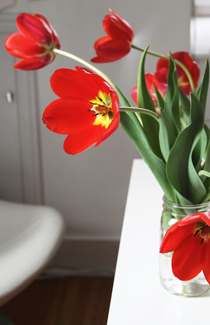 tulips, tulip flowers, red tulips, studio, Anne Butera, My Giant Strawberry