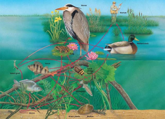 Ecosistema y biologia