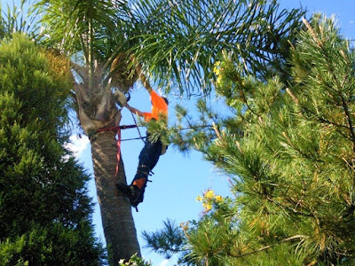 Tree-Surgery-Lake-Macquarie