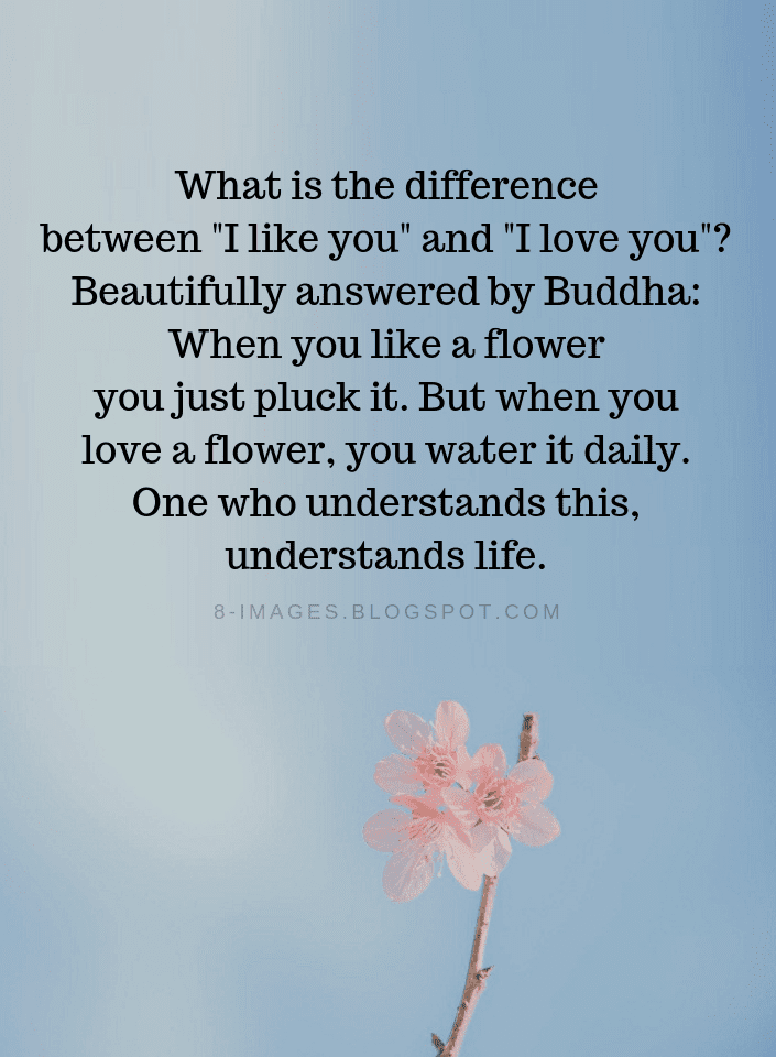 True Love Quotes What Is The Difference Between I Like You And I