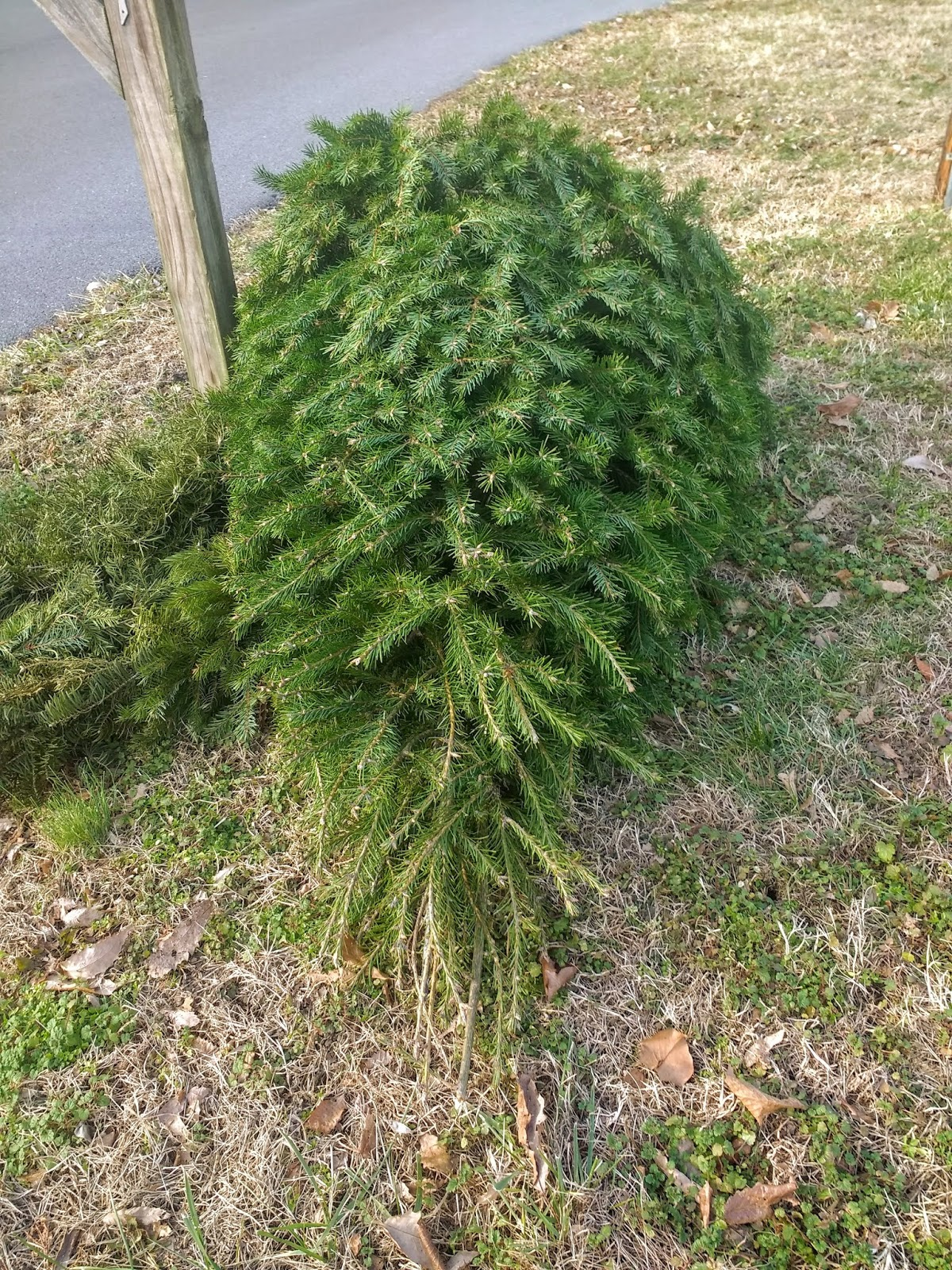Getting Rid Of The Christmas Tree Ain't All That Bad