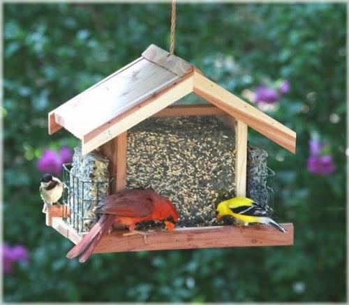 طيور, تغذية الطيور, امازون, الحسون